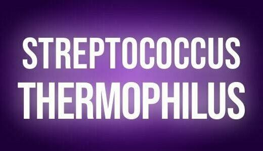 Streptococcus thermophilus
