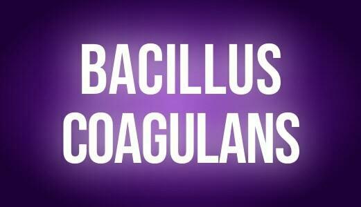 Bacilus coagulans