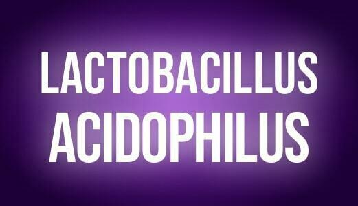 Lactobacilus acidophilus